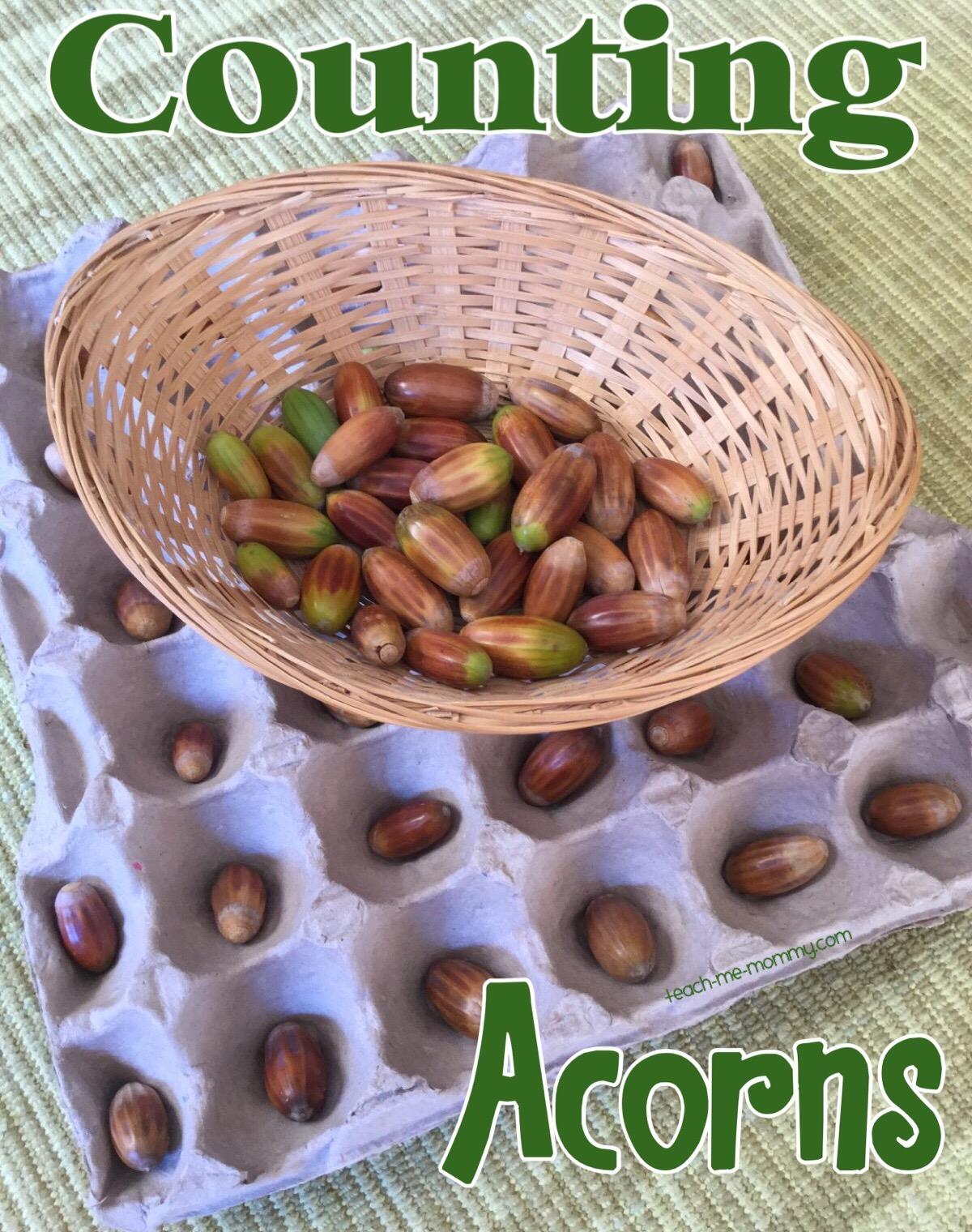 (counting acorns)