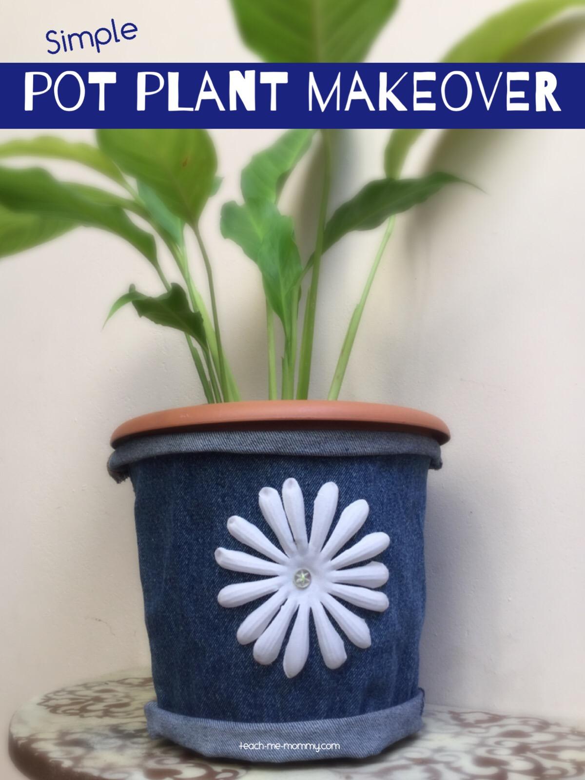 pot plant makeover