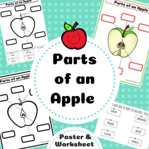 https://www.teacherspayteachers.com/Product/Parts-of-an-Apple-3992546